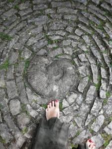 Circulo piedras -Hortensia